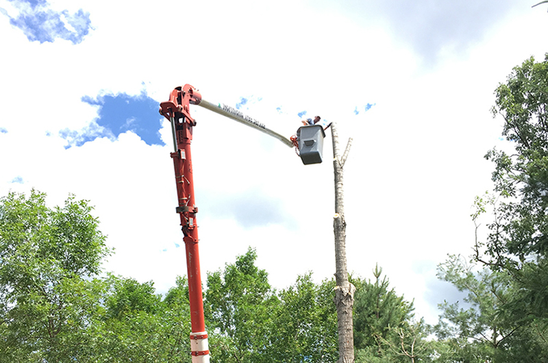 Man in a red aerial bucket, cutting a tree