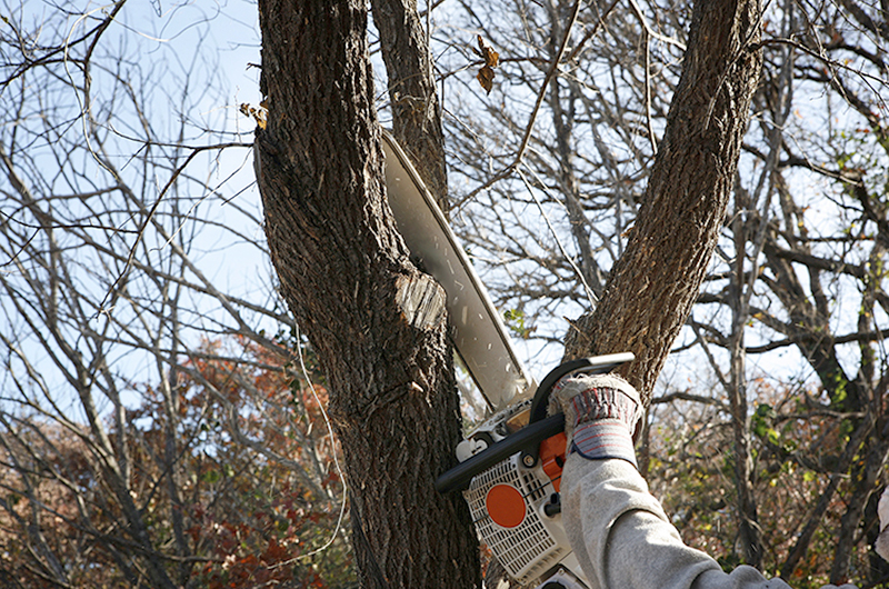 man wearing red and blue gloves cutting a limb from tree with a chainsaw