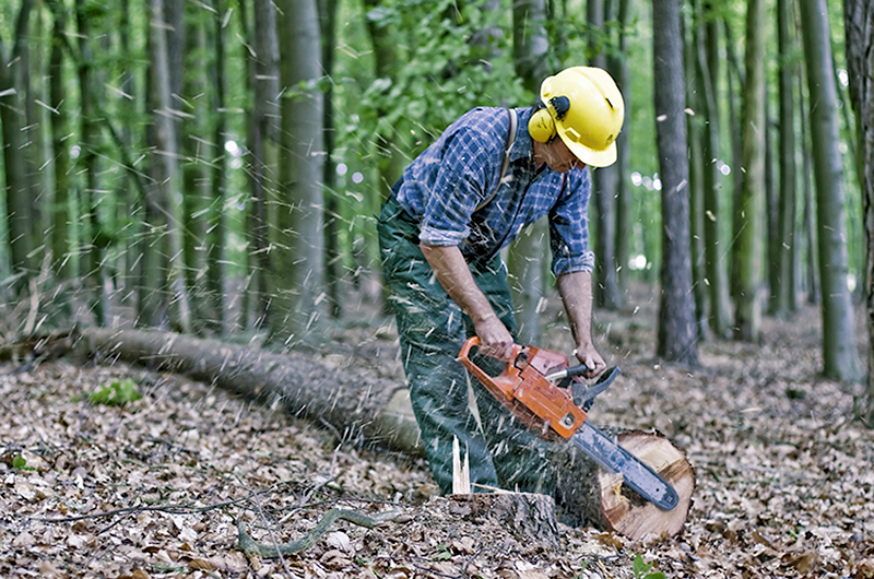 Man wearing a yellow bucket hat cutting tree