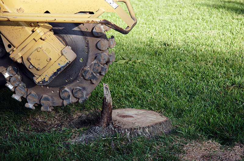 Northland tree service using their stump removal machine